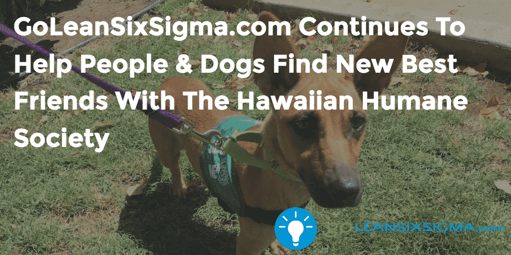 GoLeanSixSigma.com Continues To Help People & Dogs Find New Best Friends With The Hawaiian Humane Society