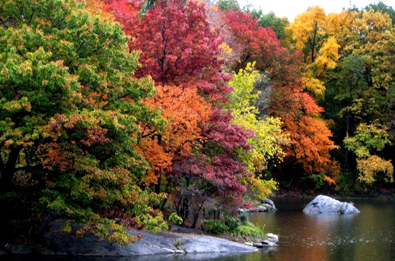 Maple trees - GoLeanSixSigma.com